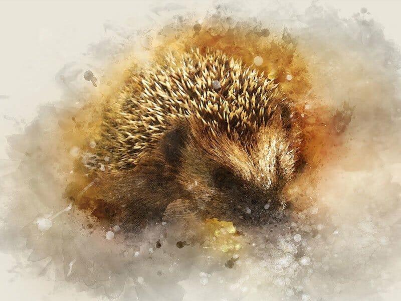 Helping hedgehogs
